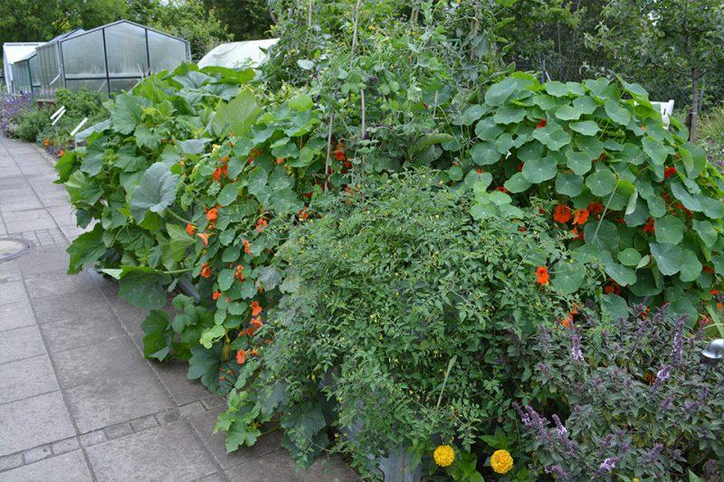 Sveže ideje za vrt in posode