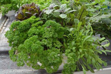 Čudovite zasaditve za želodec in oko