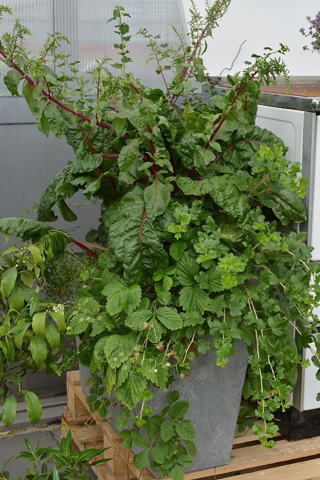 primer-zasaditve-v-posodi