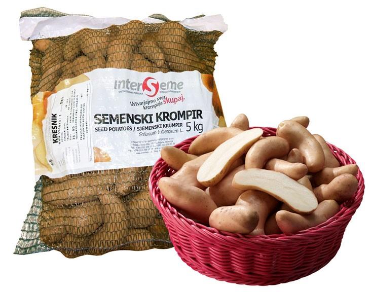 """Sorta Kresnik (""""kifeljčar) je zelo priljubljena med vrtičkarji."""