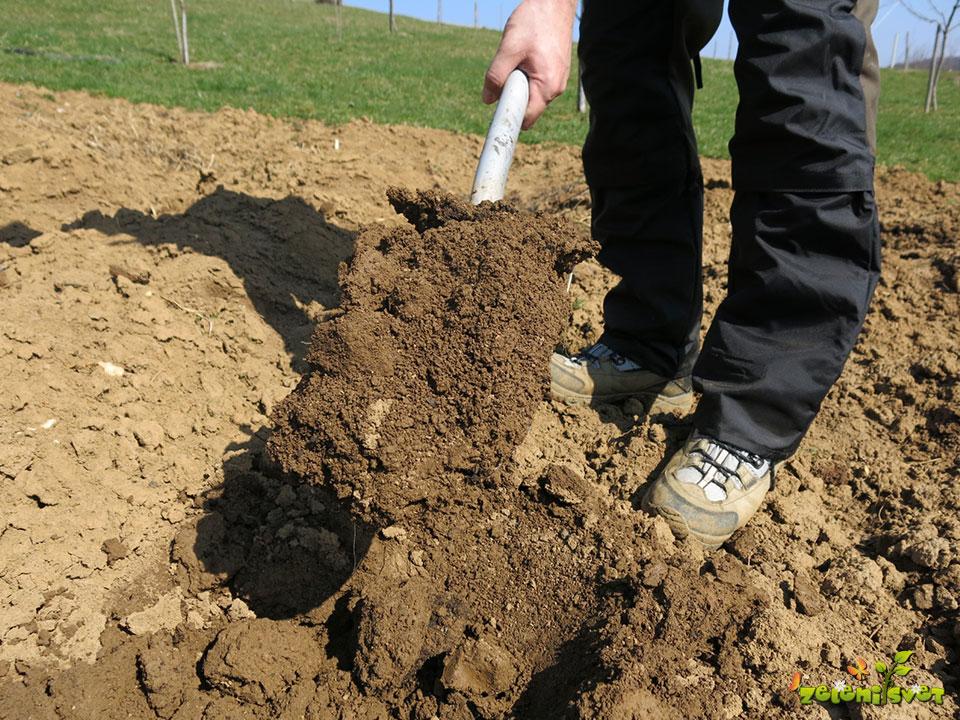 Preverjanje tal vlažnosti tal z lopato.