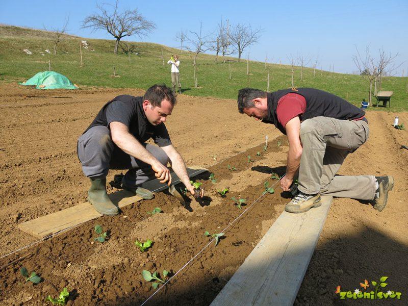 Izbira sadike in dobri sosedje