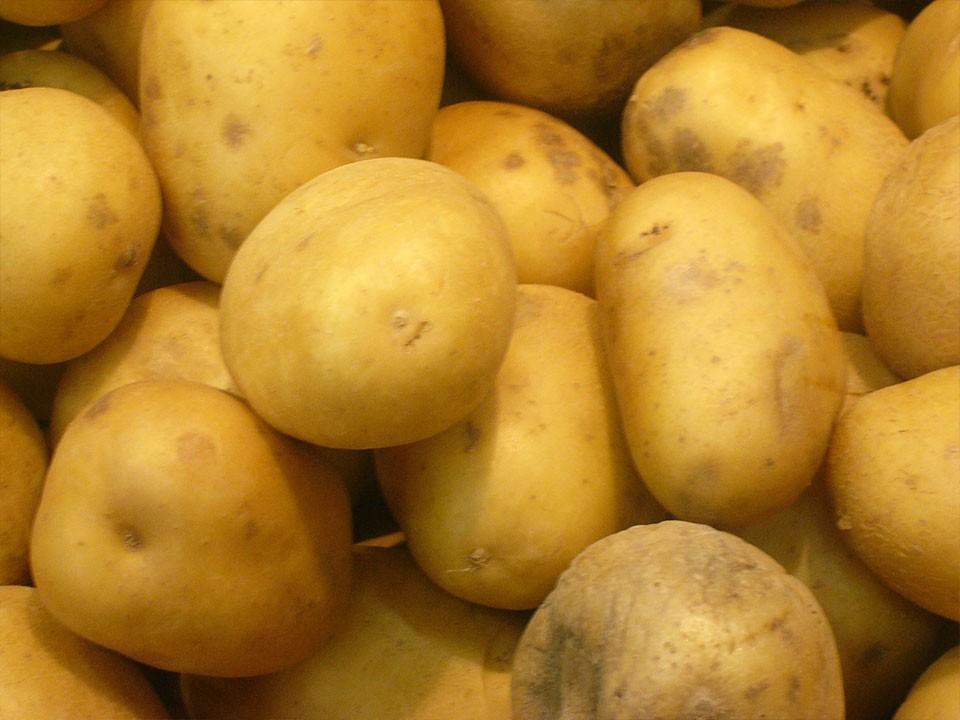 Skladiščenje krompirja