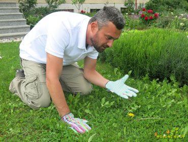 Odstranjevanje plevela in mahu