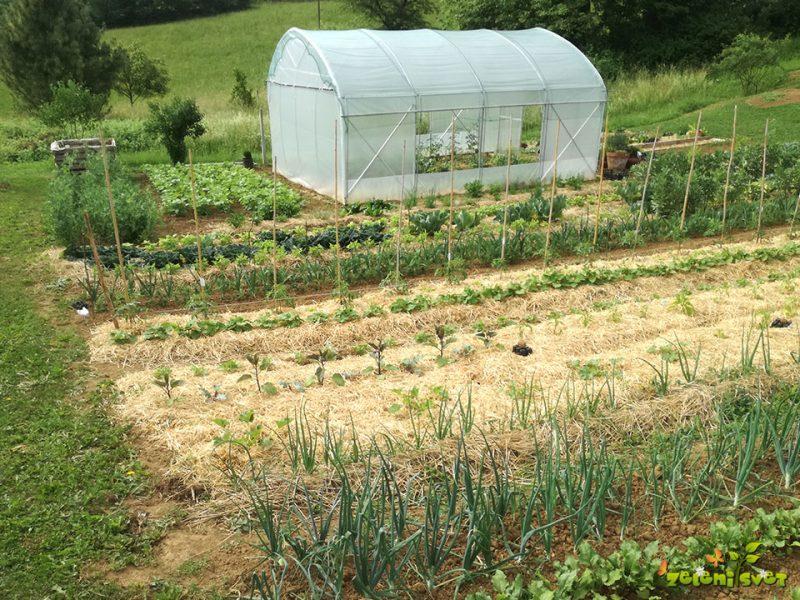 Sorte in sadike za dober pridelek