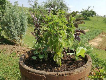 Vrt v posodi