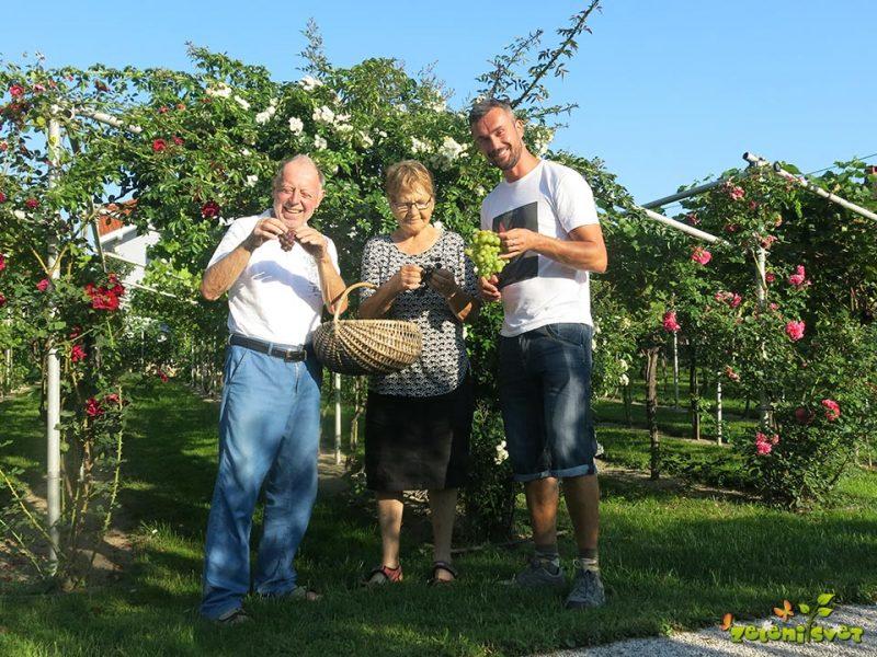 Vrt zakoncev Najdič in odporne sorte grozdja