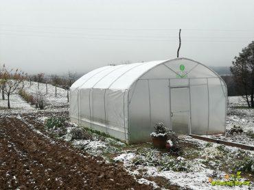 Zimska zelenjava z domačega rastlinjaka in okenske police
