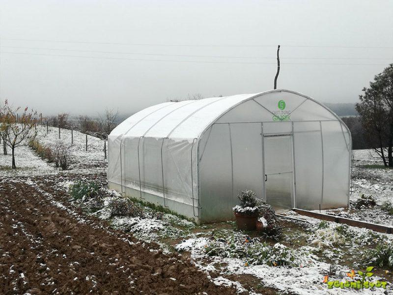 Zimska zelenjava iz domačega rastlinjaka in okenske police