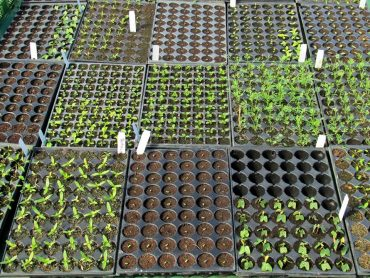 Kaj sejemo in sadimo v februarju?