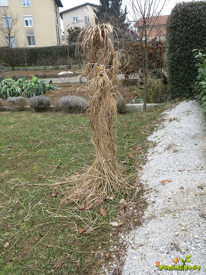 zaščita sadik pred mrazom