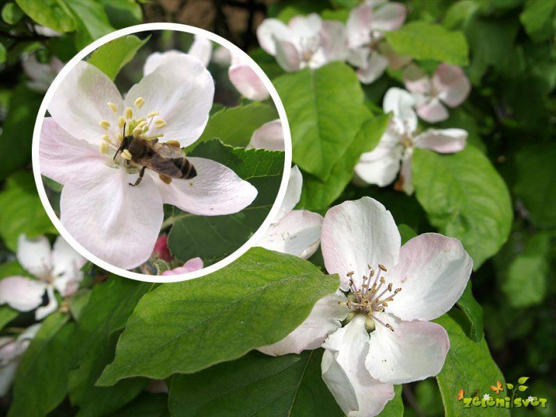 Majska opravila in prvi plodovi v sadnem vrtu
