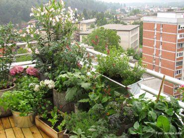 Junijska opravila na balkonu