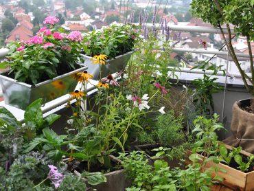 Julijska opravila na balkonu, za dobro rast in zdrave rastline
