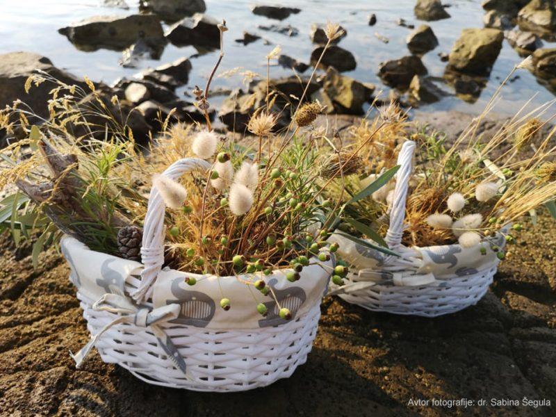 Poletna košarica in suh morski aranžma