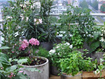 Kaj sejemo in sadimo v mesecu avgustu na balkonu?