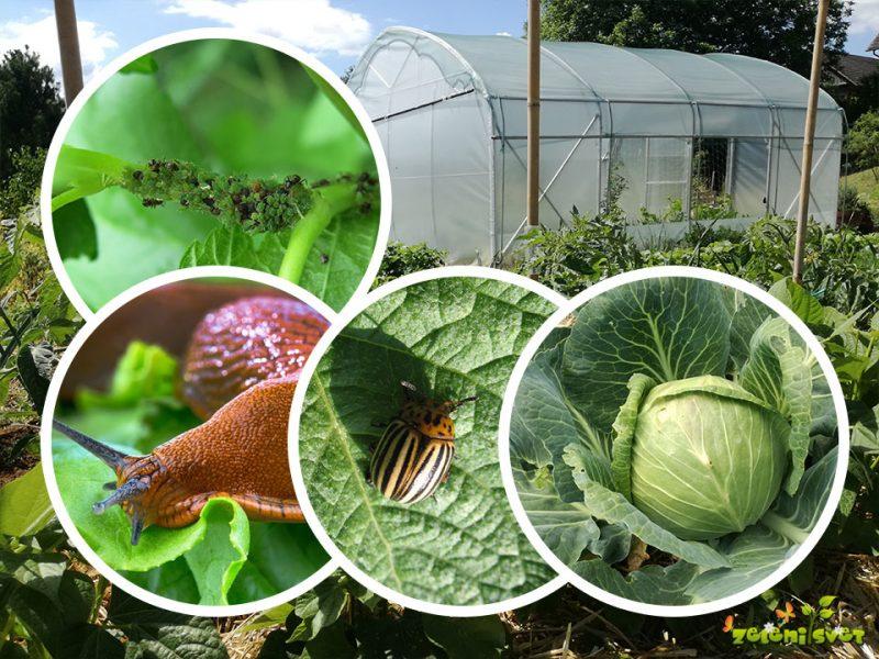 Domače EKO rešitve proti požrešnim vrtnim škodljivcem