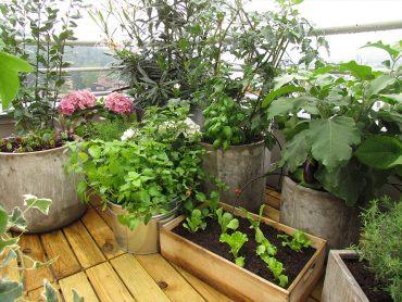 Septembrske setve na balkonu, za jesensko zimske krožnike