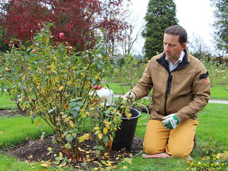 Rez vrtnic, škropljenje in zaščita pred zimo