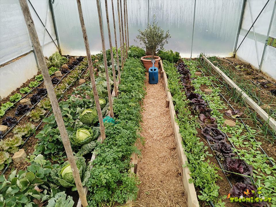 Kako smo ogreli domač rastlinjak, ga zalili in prezračili?