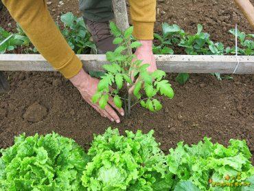 Bogat pridelek in kakovostna sadika