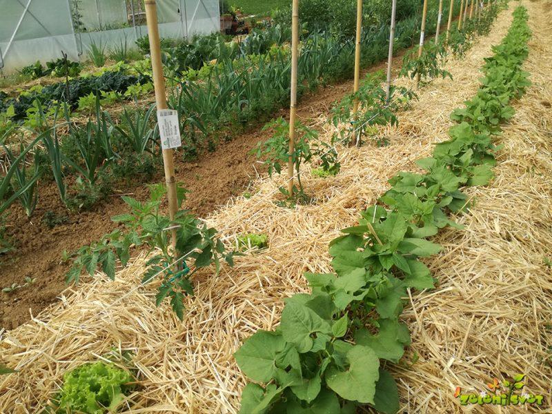Kaj sejemo in sadimo v maju?