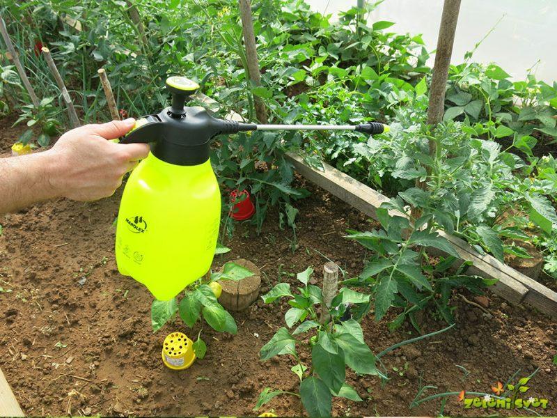 Bio krepitev paradižnika za odporno rastlino