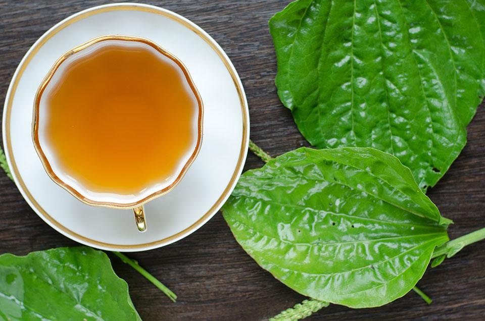 trpotčev čaj