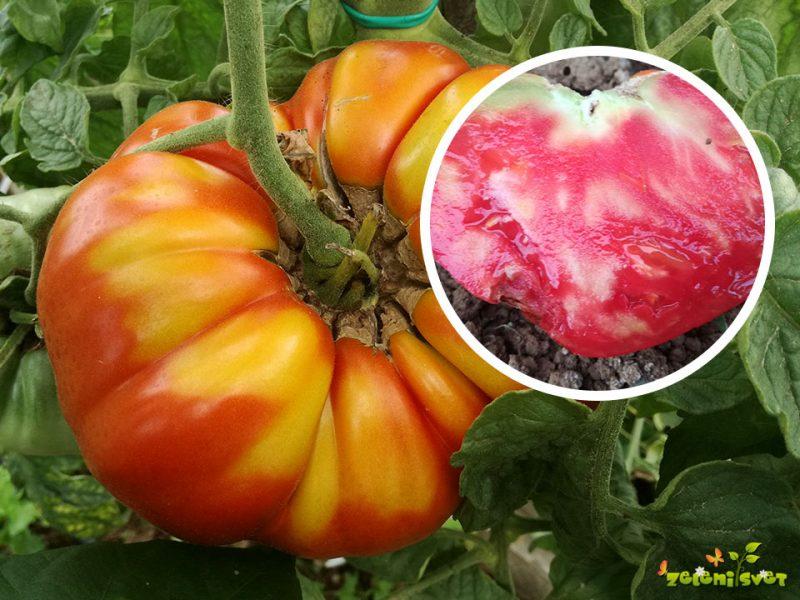 Zakaj je paradižnik, trd, nedozorel, deformiran in razpokan?