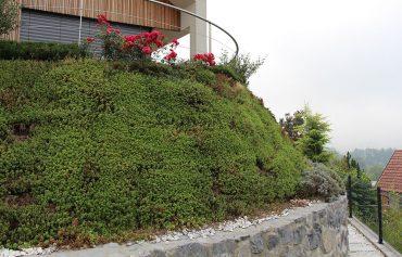 Kako zasadimo brežino, mejo in strme predele vrta?