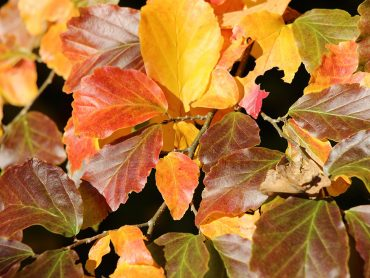 5 rastlin, ki so najlepše v jesenskem času