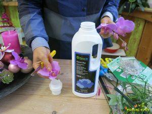 pomakanje cvetnega stebla