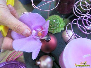 polaganje orhidej