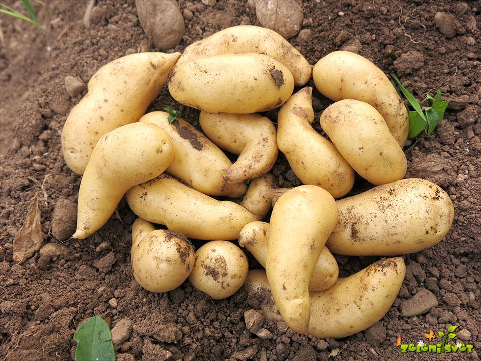 krompir in sadje