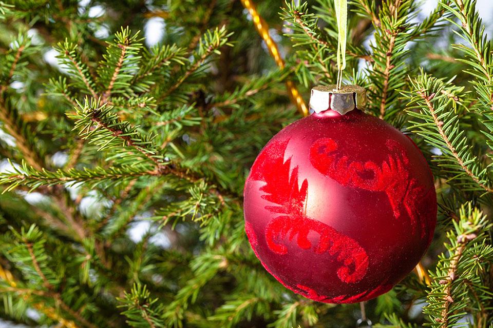 iglice smreke božično drevo