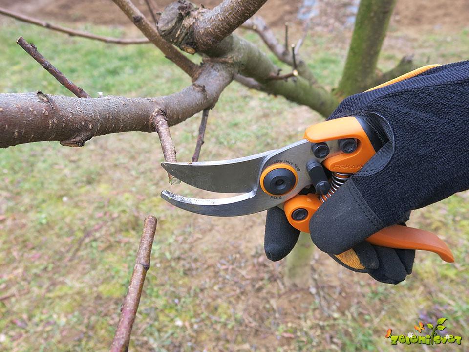Obrezovanje in škropljenje breskve za rodno in zdravo drevo