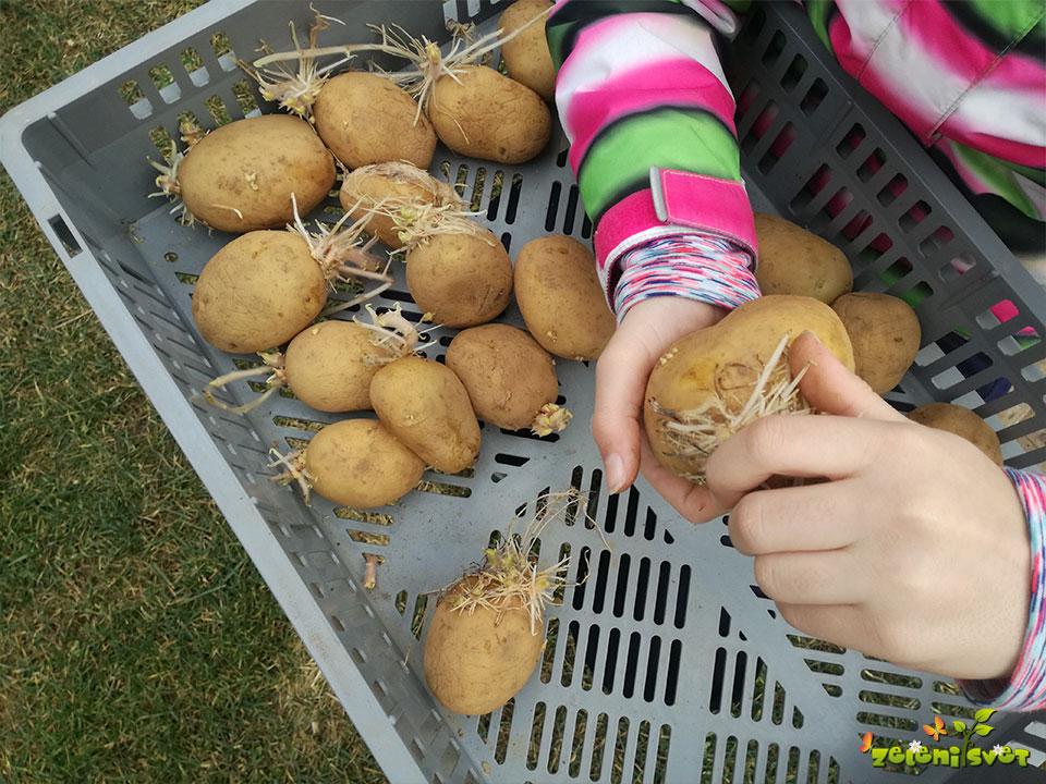 krompir apikalni kalič