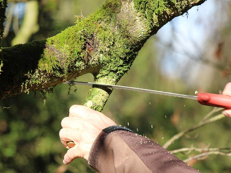 Pravilno obrezovanje okrasnih dreves