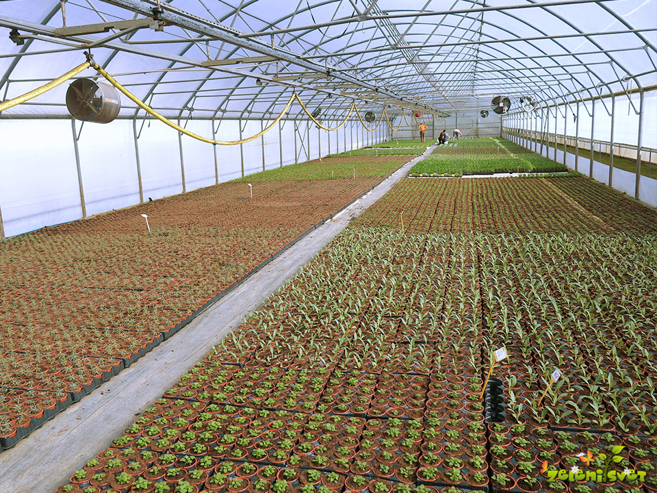 zelišča gojenje