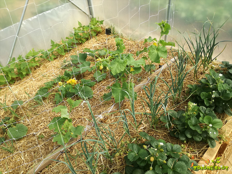 sajenje rastlinjak vrt
