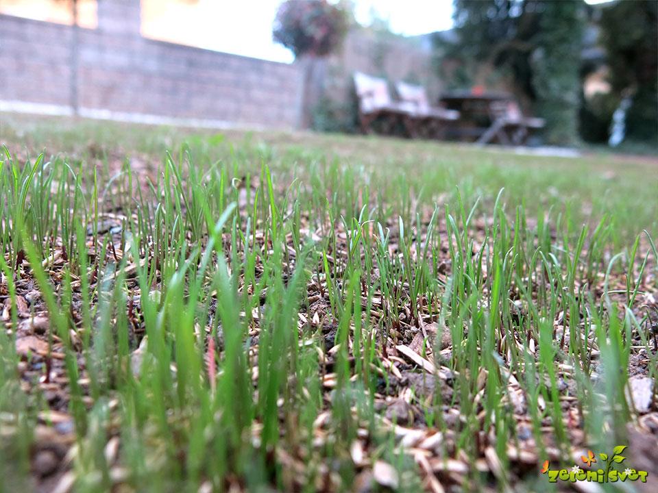 mlada trava trata