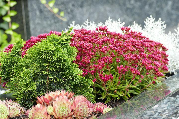 Nenavadna krasula za bujno cvetenje brez zalivanja