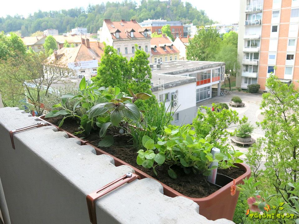 Zelišča in zeliščni vrt na balkonu
