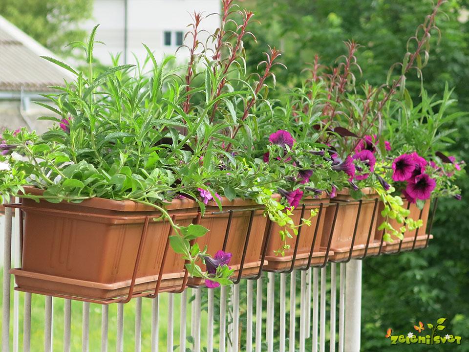 Balkonska zasaditev za sončno lego