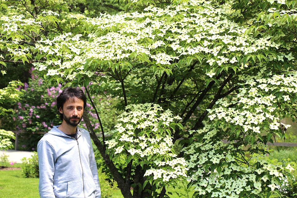 Japonski cvetni dren – cvetoči lepotec za vsak vrt
