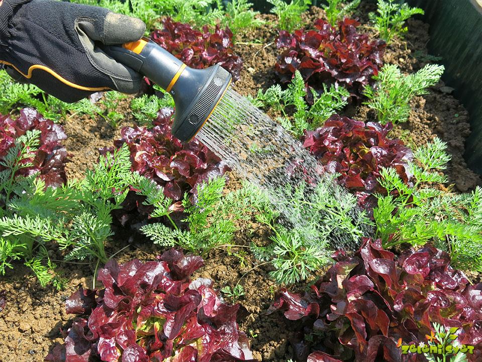 Zalivanje in namakanje v vrtu na enostaven način