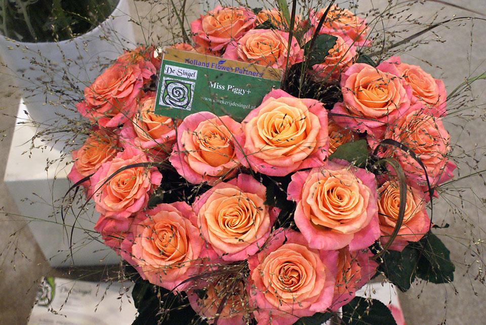 vrtnica miss piggy