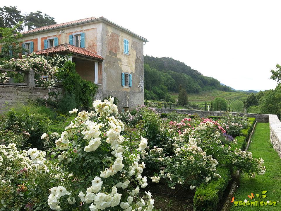 vrtnice in vinograd