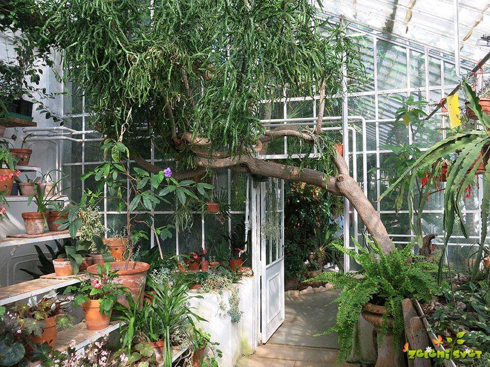 zgodovinski rastlinjak