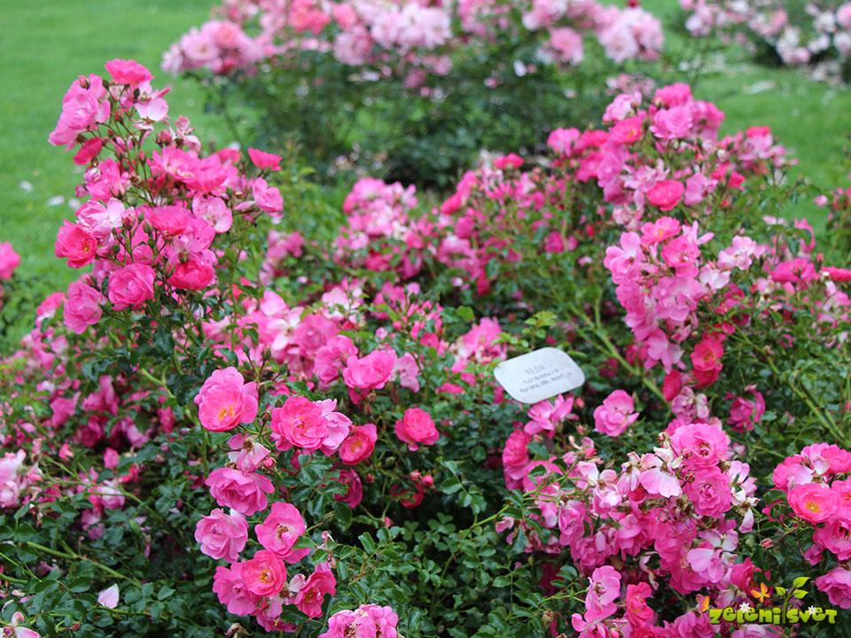 prekrovna vrtnica
